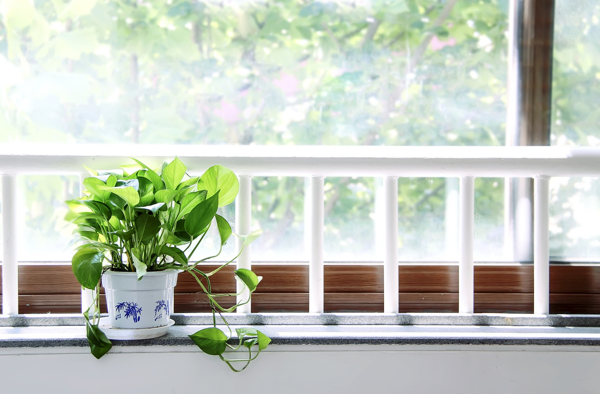 Potted plant sitting on window